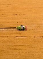 مبنای خرید تضمینی گندم در سال ۱۴۰۰ چیست؟