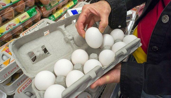 افزایش قیمت تخم مرغ گرانی تخم مرغ