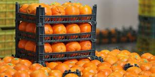 افزایش قیمت پرتقال