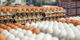 قاچاق تخم مرغ