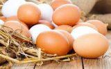 صادرات تخممرغ متوقف شد