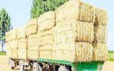 هشدار نسبت به قاچاق کاه از مرزهای کشور