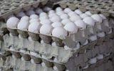 قیمت هر شانه تخم مرغ در بازار چقدر است؟